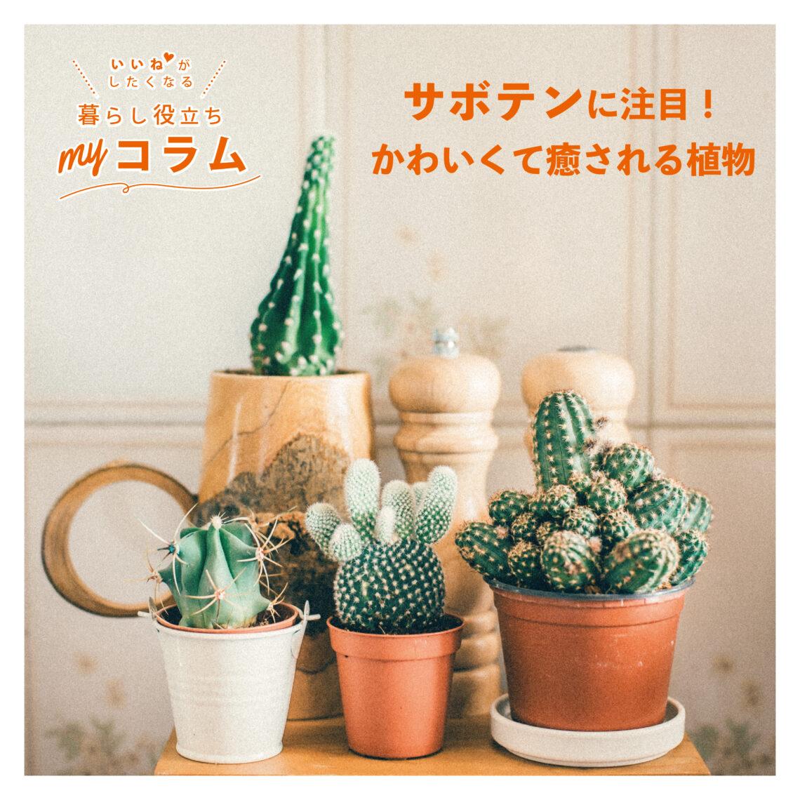 サボテンに注目🌵かわいくて癒される植物